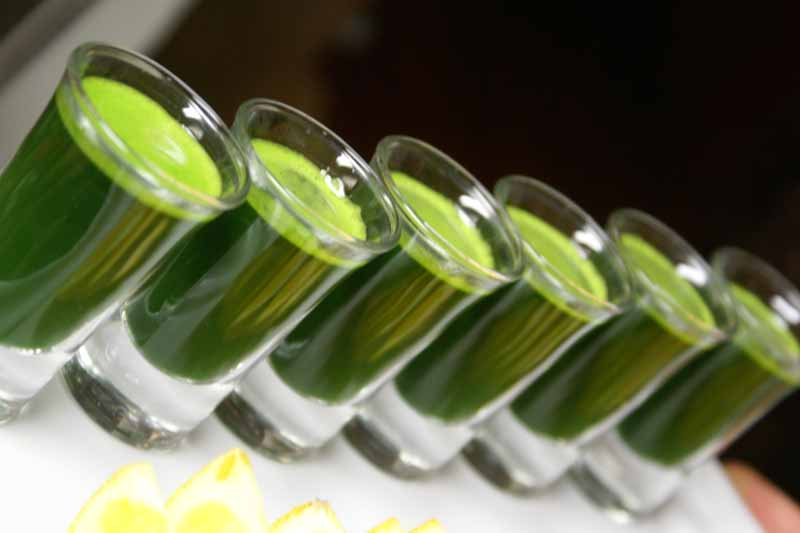 How much wheatgrass to drink?